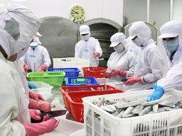 Agifish đã chi 1,5 triệu USD thương lượng chống bán phá giá cá tra, basa