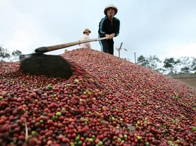 Cung nông sản Việt Nam dư thừa, vượt quy hoạch