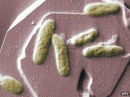 Phát hiện khả năng sản xuất pin sinh học từ vi khuẩn