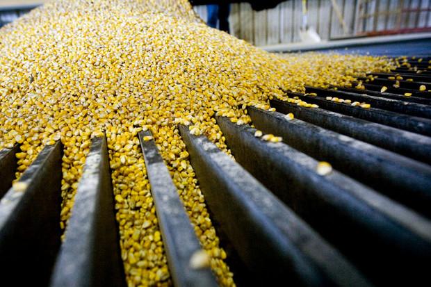 Nguồn cung ngô Mỹ giảm mạnh nhất gần 4 thập kỷ
