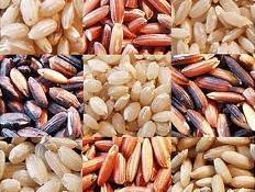 Nhập khẩu gạo Trung Quốc dự báo tăng 4% vụ 2013-2014