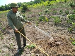 Hàng chục ngàn cây sao và dầu ở Đồng Nai chết khô
