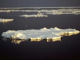Nam Cực đang tan chảy với tốc độ nhanh nhất 1000 năm
