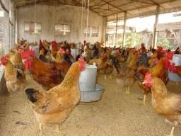 Thức ăn chăn nuôi Việt Thắng dự kiến cổ tức 15% năm 2013