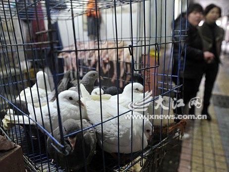 Trung Quốc cảnh báo cúm H7N9 lan rộng
