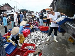 Thu hoạch thủy sản thất thoát đến 25%