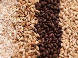 Dự báo sản lượng ngũ cốc toàn cầu tăng 7%