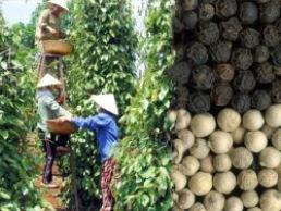 Doanh nghiệp FDI chiếm lĩnh thị phần xuất khẩu hồ tiêu