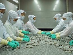 Thủy sản Minh Phú bất ngờ lên kế hoạch rút niêm yết