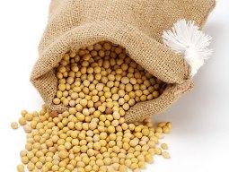 Giá đậu tương tăng nhờ kỳ vọng nhu cầu cải thiện trong dài hạn