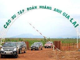 HAGL phủ nhận cáo buộc vi phạm pháp luật tại Lào và Campuchia của Global Witness