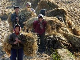 Nạn đói ở Triều Tiên chỉ là bịa đặt