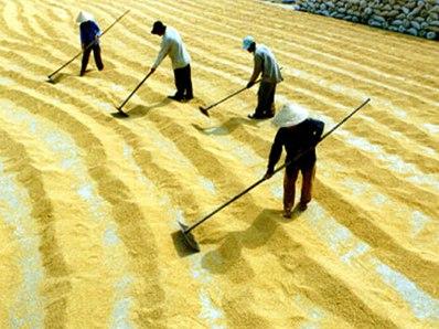 Nhà nước không kiểm soát được mua bán gạo tạm trữ