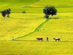 Thái Lan can thiệp thị trường gạo năm thứ 3 liên tiếp