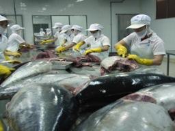 Cá ngừ vằn Việt Nam gặp khó tại Mỹ