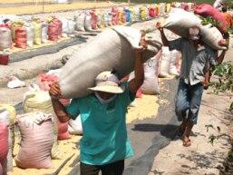 Trung Quốc liên tục ép giá, hủy hợp đồng mua gạo Việt Nam