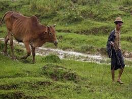 Con đường nào giúp người dân nông thôn Myanmar thoát nghèo?