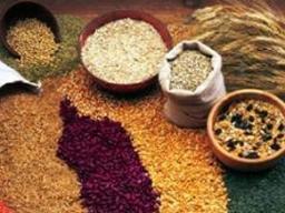 FAO dự báo giá lương thực toàn cầu tăng 10-14% trong 10 năm tới