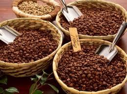 Giá cà phê Tây Nguyên tăng trở lại lên 40,6 triệu đồng/tấn