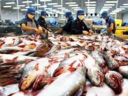 Cá tra Việt Nam có nguy cơ mất vị thế độc quyền
