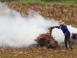 Việt Nam có thể sản xuất 31 triệu tấn dầu sinh học mỗi năm từ rơm rạ
