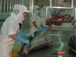 Xuất khẩu cá tra giảm mạnh, đối mặt với nguy cơ thiếu nguyên liệu