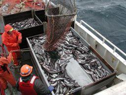 Giá thủy sản toàn cầu tăng kỷ lục