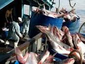 Thượng viện Mỹ muốn thanh tra cá da trơn
