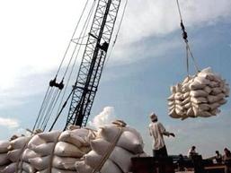 Giá lúa ĐBSCL tuần qua tăng nhẹ 100-150 đồng/kg