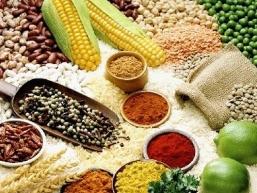 Thế giới đối mặt với nguy cơ thiếu lương thực năm 2050