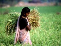 FAO: Năm 2050 cần tăng 70% sản lượng lương thực toàn cầu mới đủ đáp ứng nhu cầu