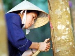 Giá bán bình quân cao su Phước Hòa giảm hơn 3 triệu đồng/tấn