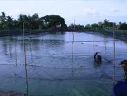 Mỹ hỗ trợ Myanmar phát triển nghề cá