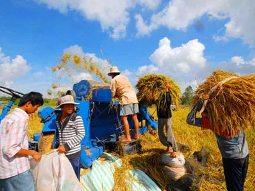 Phát triển liên kết sản xuất gắn với tiêu thụ nông sản