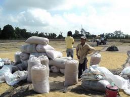 Tạm trữ lúa gạo: Vì sao cung chưa gặp cầu?