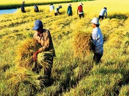 Bộ NN&PTNT đề nghị gia hạn mua tạm trữ thóc, gạo