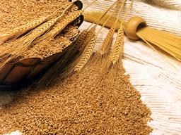 Nhập khẩu lúa mỳ Iran năm nay giảm tới 2/3 do dự trữ cao
