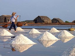 Sản lượng muối tăng hơn 40% so với năm ngoái