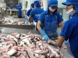 Giá cá tra nguyên liệu ĐBSCL tăng nhẹ 100-300 đồng/kg so với tuần trước