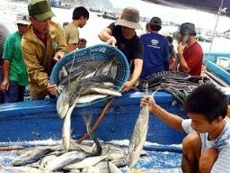 Thủy sản bị ép giá do ngư dân lệ thuộc vào xuất khẩu tiểu ngạch