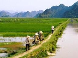 Diện tích đất canh tác nông nghiệp ngày càng thu hẹp