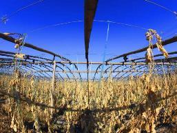 Nông sản Trung Quốc thiệt hại do thời tiết