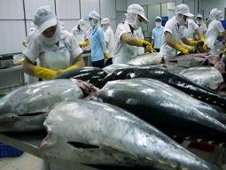Xuất khẩu cá ngừ gặp khó khăn do thiếu nguyên liệu