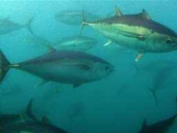 EU giảm hạn ngạch khai thác thủy sản năm 2013