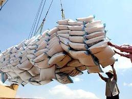 Xuất khẩu gạo giảm 50% trong tháng 8