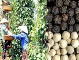 Việt Nam phải nhập hồ tiêu để xuất khẩu