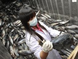 Từ 1/9, hàng thủy sản nhập từ Nhật Bản không bị kiểm tra chặt dư lượng phóng xạ