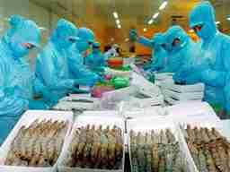 Thủy sản Minh Phú không chịu thuế chống bán phá giá tôm đông lạnh vào Mỹ
