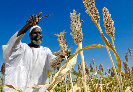 UN: Khoảng 30% lương thực đã bị lãng phí hàng năm