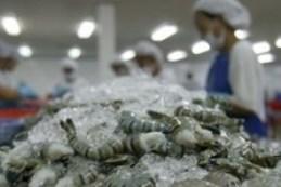 Mỹ hủy vụ kiện chống trợ giá tôm của Việt Nam